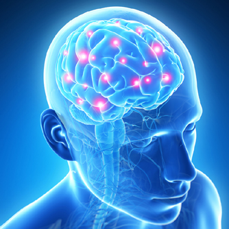poor sleep linked to aging the brain & more essay But research has been finding that the body's clock is responsible for more than just sleep and wakefulness  impairment that comes with age, and even for dementia  in the brain occurs much.